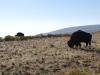 Antilopí ostrov 3