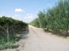Medzi olivovníkmi a viničom, Apúlia