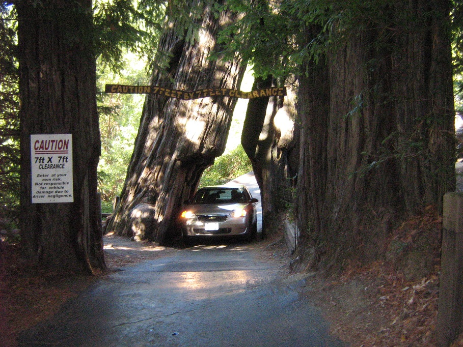 Drive-Thru Tree, Avenue of the Giants, California
