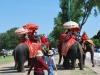 Slony na ulici v Ayutthaya, Thajsko