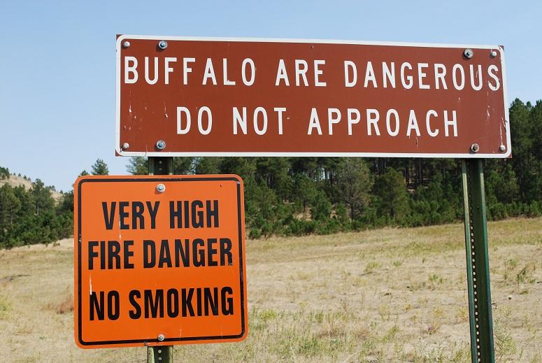 Caster State Park, Black Hills, Bizóny sú nebezpečné