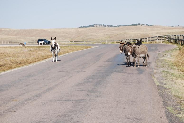 Caster State Park, somáre namiesto bizónov
