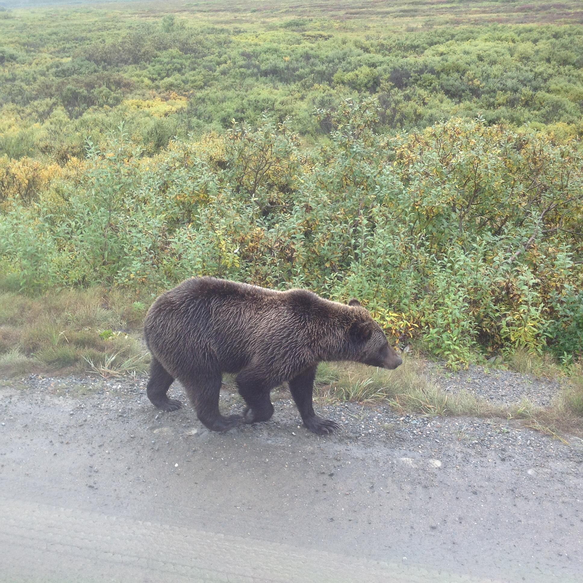 Z autobusu, Denali National Park, Aljaška
