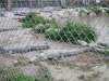 Aligátory, Aligator Farm, Florida, USA