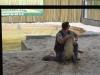 Aligator Show, Aligator Farm, Florida, USA