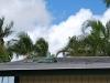 Leguán na streche, Aligator Farm, Florida, USA