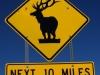 Pozor na stojaceho jeleňa