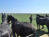Potešenie z koní v Hortbágy Nemzeti Park, Maďarsko