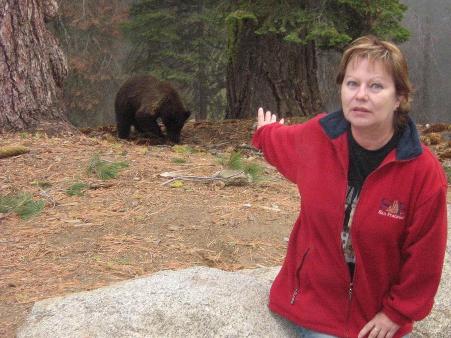 Stretnutie s medveďom, Sequoia National Park, Kalifornia