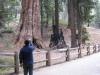 Kings Cannyon National Park, Kalifornia