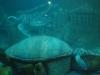 Morské akvárium na ostrove, Nha Trang, Vietnam