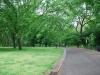 Central Park, NYC, USA