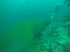 Potápanie na Phi Phi, Thajsko