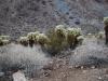Púšť v Arizone