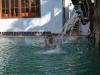 Smelý Zajko v bazéne, Siem Reap, Kambodža