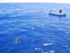 Žralok pri lodi, Egypt