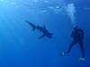 Stretnutie so žralokom, foto: Braňo Kraker