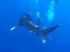 Žralok, foto: Braňo Kraker