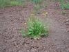 Zeleň v kráteri sopky Vezuv