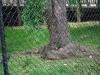 Veveričky, Capitol, Washington, D.C.