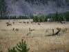 Yellowstone National Park 90