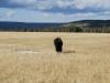 Yellowstone National Park 99