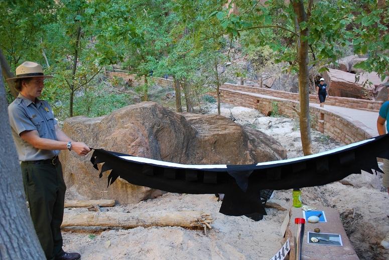 Orol má takéto rozpätie krídiel, Zion National Park, Utah