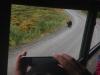 Medveď pri ceste