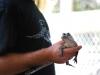 Aligátoria show, Aligator Farm, Florida, USA