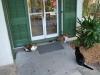 Mačky v Hemingway House, Key West, Florida
