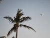 V Starom prístave, Key West, Florida