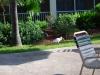 Ibis pri hotelovom bazéne, Key West, Florida