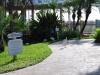 Volavky pri našom hoteli, Key West, Florida