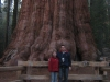 General Sherman Tree, Sequoia National Park, Kalifornia