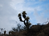 Kaktus,v Arizonskej púšti