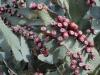 Kaktus v Barstow, Route 66 California