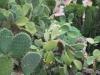 Kaktusy Gréckeho divadla, Taormina