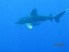 Žralok, foto: Robo Štetiar
