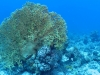 Coral reef, The Brothers Islands, Egypt