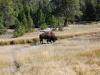 Yellowstone National Park 34
