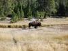 Yellowstone National Park 36