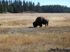 Yellowstone National Park 37