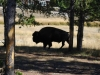 Yellowstone National Park 38