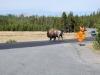 Yellowstone National Park 39