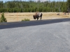 Yellowstone National Park 40