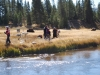 Yellowstone National Park 46