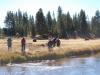 Yellowstone National Park 47