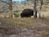 Yellowstone National Park 50