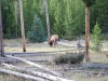 Yellowstone National Park 80