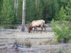 Yellowstone National Park 81